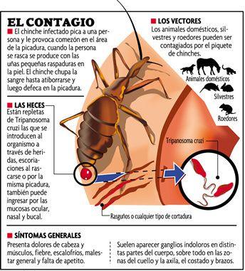 infección parasitaria en humanos chinches
