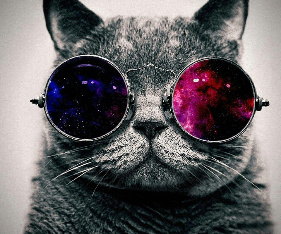 Galaxy LentesGatetes Y Con Cats Gatos CatSunglasses y6gfb7