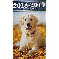 Labrador Retriever 2018 2019 2 Year