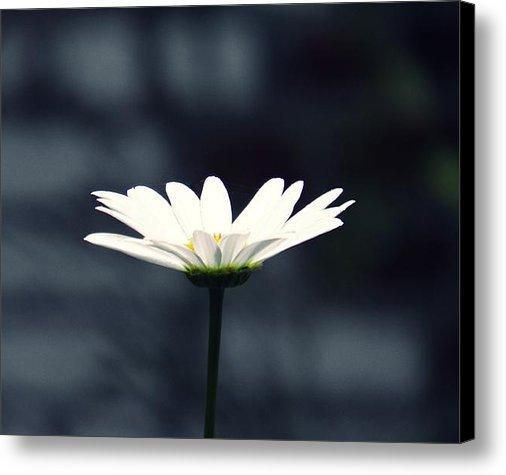 "New artwork for sale! - ""Perfect Daisy"" - http://fineartamerica.com/featured/perfect-daisy-sarah-loft.html … @fineartamerica"