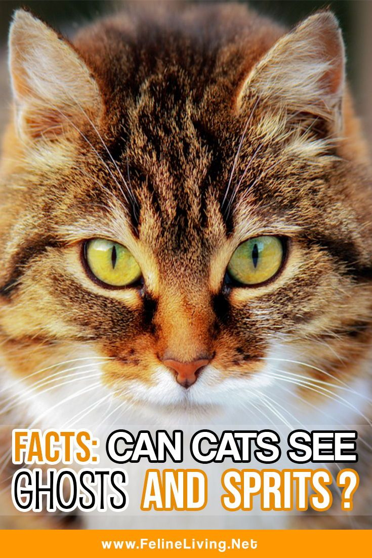 FACTS Can cats see ghosts and spirits? Can cats see