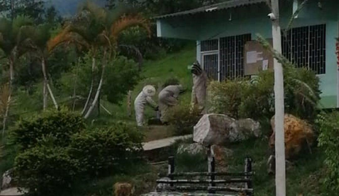 Ataque De Abejas En Cunday Sesenta Personas Fueron Atacadas Por Un Enjambre De Abejas Ibag Outdoor Decor Garden Sculpture Plants