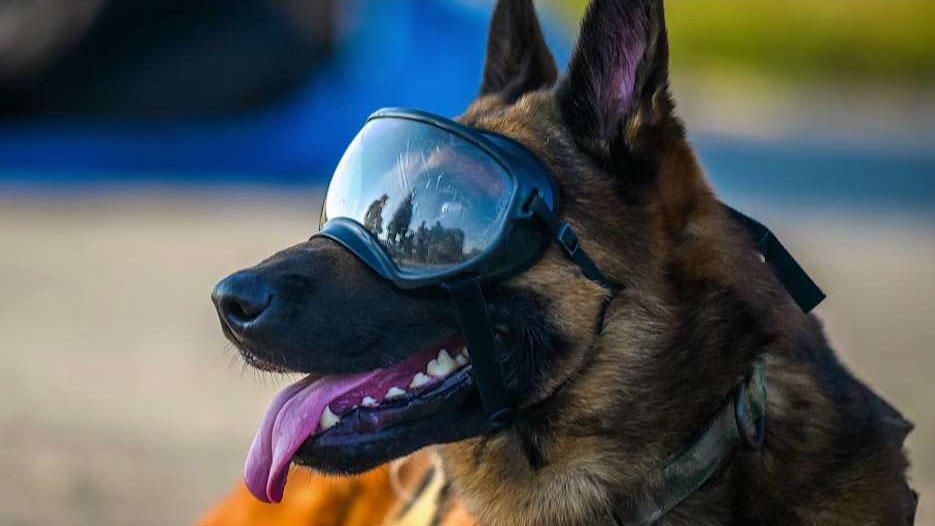 Medal ceremony honors military animals #germanshepards