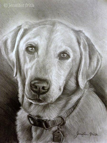 Pet Portrait, in pencil...for my sister-in-law, Natalie ... Who couldn't love a face like this!  :)