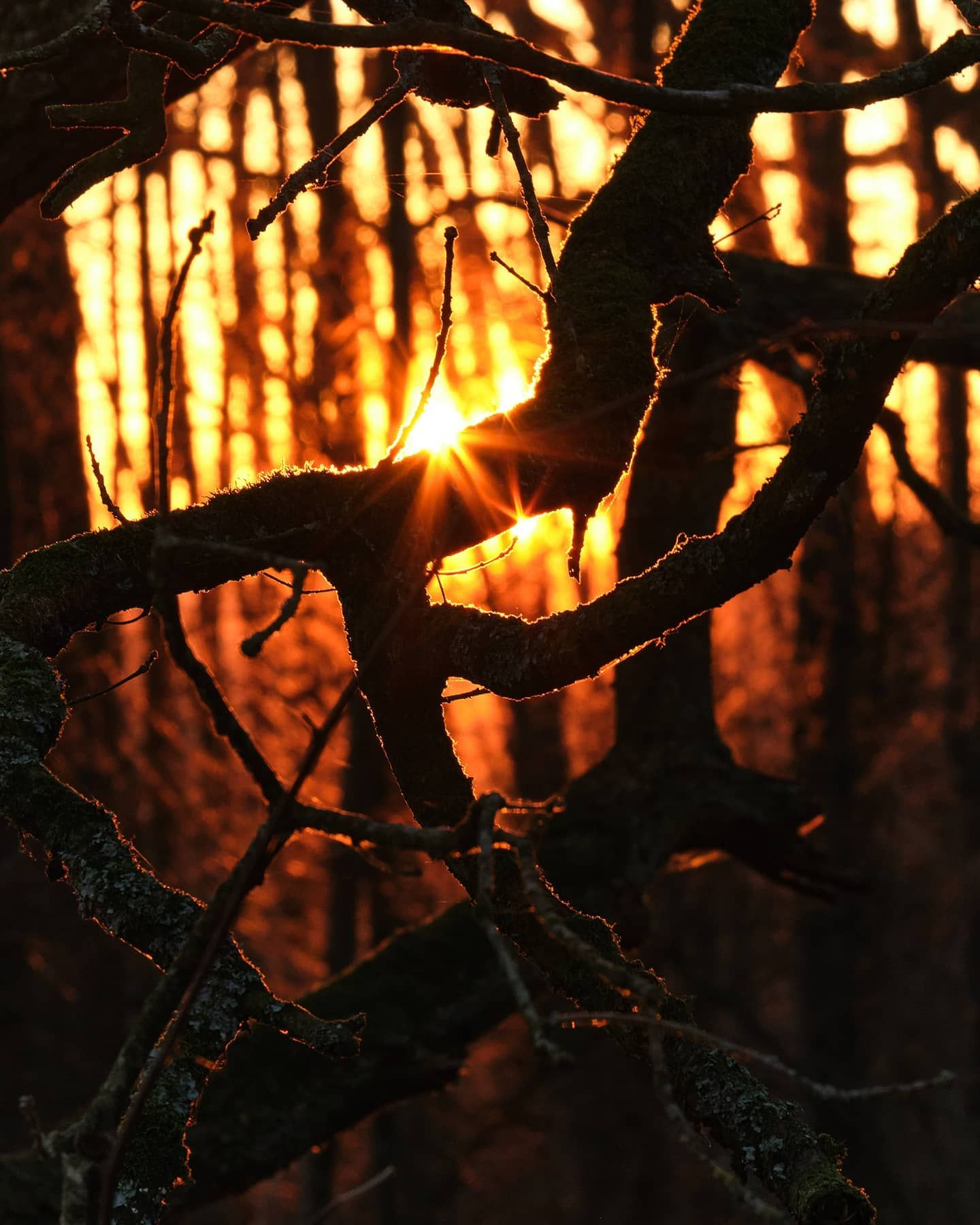Sunset Branches   Leusden .  Fujiflim X-T30  XF55-200mm   ƒ/16   1/30   200 mm   ISO800  Leusden The Netherlands . . . . . . #Staycreativeathome @fujifilmnederland #fujifilmnederland #avondfotografie #CaptureOne #fujixt30 #fujixseries #explore_nature #landscapelovers #natures_moods  #loves_united_nature #splendid_trees #naturemood #moody_captures #natures_mood #gottalove_a  #treesunset #sunsetbehindtrees #instasunsets_trees #sunsetthroughtrees #explore_landscapes #trees #naturepix #earthshot #su