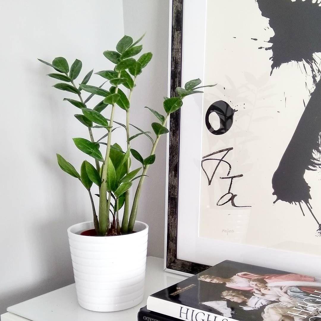 5 piante da appartamento facili da curare Elle Decor