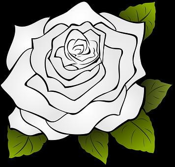 Rosa Flor Blanco Rosa Blanca Lineas Rosas Blancas Rosas Y Blanco