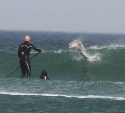 New Smyrna Beach Dolphin Jumping From Surf Awesome