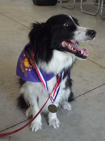 Ohio Border Collie Rescue Border Collie Dog Lab Dogs Border Collie