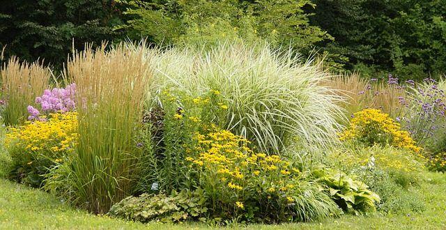 blühende Stauden für den Sommer Gartenpflanzen Pinterest - gartenpflanzen