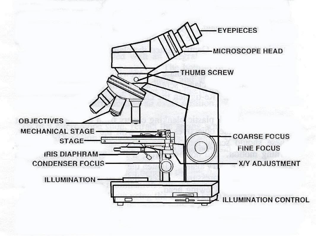 Parts Of A Microscope Worksheet Simple Microscope Labeling Worksheet In 2020 Parts Of Speech Worksheets Microscope Parts Worksheets