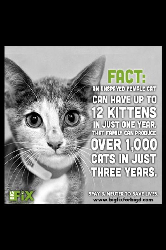 Spay Neuter Facts Animal Welfare Cats Kittens Animal