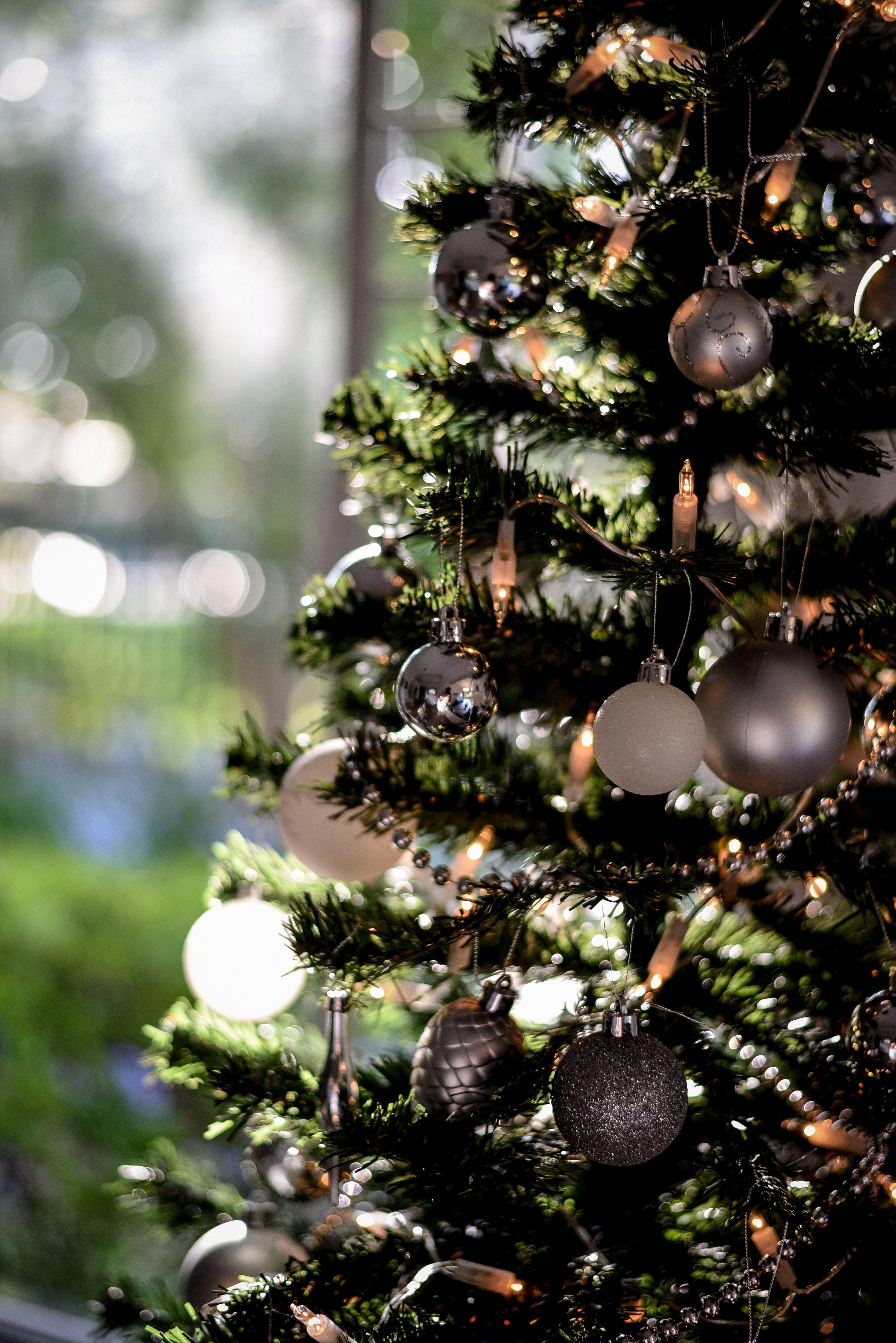 Christmas In Johannesburg Christmas Photoshoot Party Photography Christmas Photos