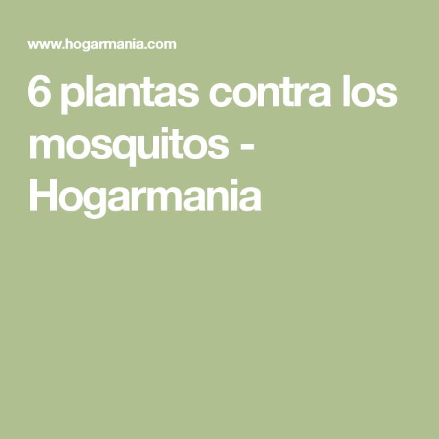 6 plantas contra los mosquitos hogarmania jardi pinterest plantas jardiner a y plantas - Plantas contra los mosquitos ...