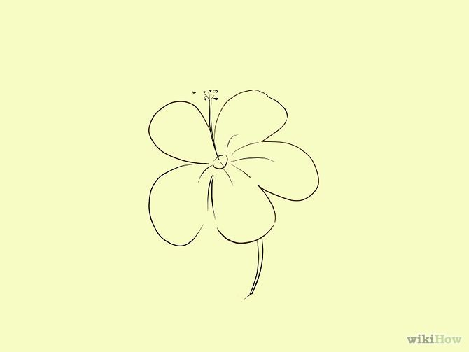 Draw A Cartoon Hibiscus Flower Step 5
