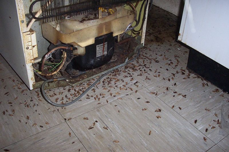 Roach infested refrigerator in Phoenix | Insect Frenzy | Pinterest ...