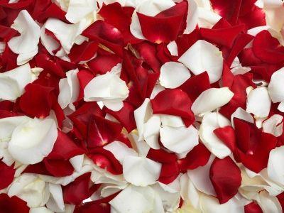 Flower wallpapers red white rose petals wallpaper jr pinterest flower wallpapers red white rose petals wallpaper mightylinksfo
