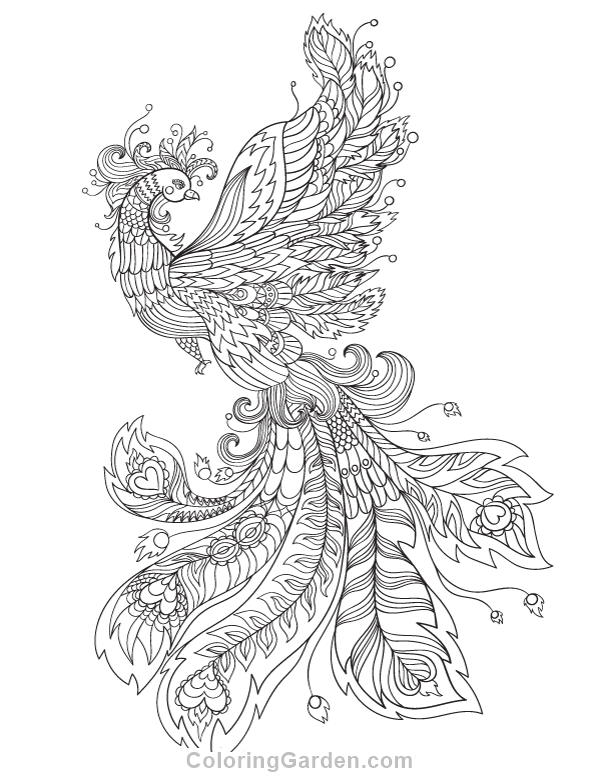 Phoenix Coloring Pages Free Printable Phoenix Adult Coloring Page Download It In Pdf Picture With Images Coloring Pages Peacock Coloring Pages Printable Adult Coloring Pages