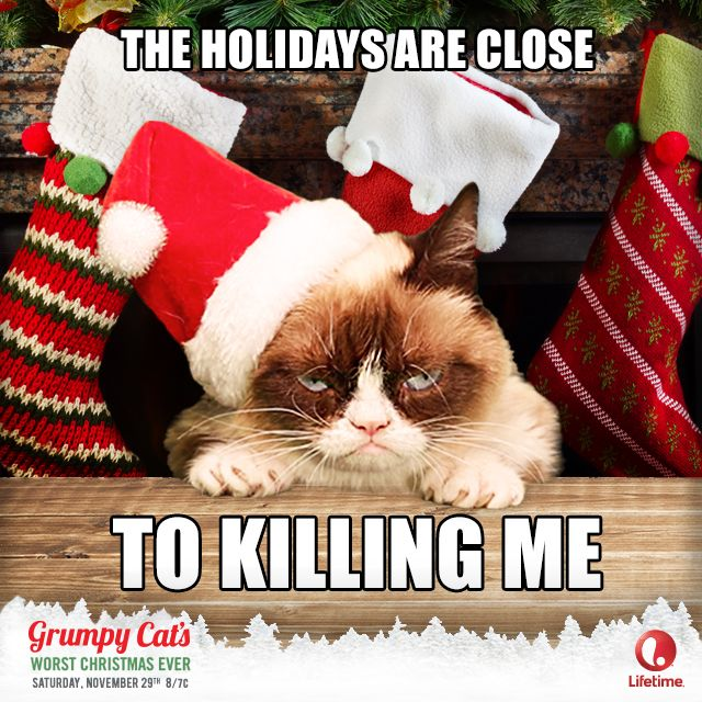 Grumpycat the holidays are close killing me lifetime grumpy cat humor thecheapjerseys Gallery