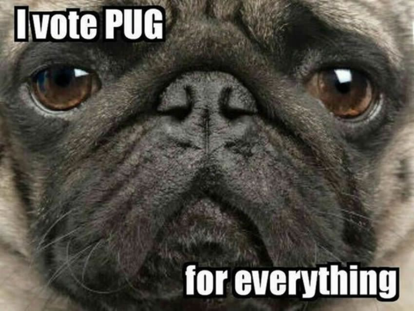 The Following Message Has Been Approved By Join The Pugs All