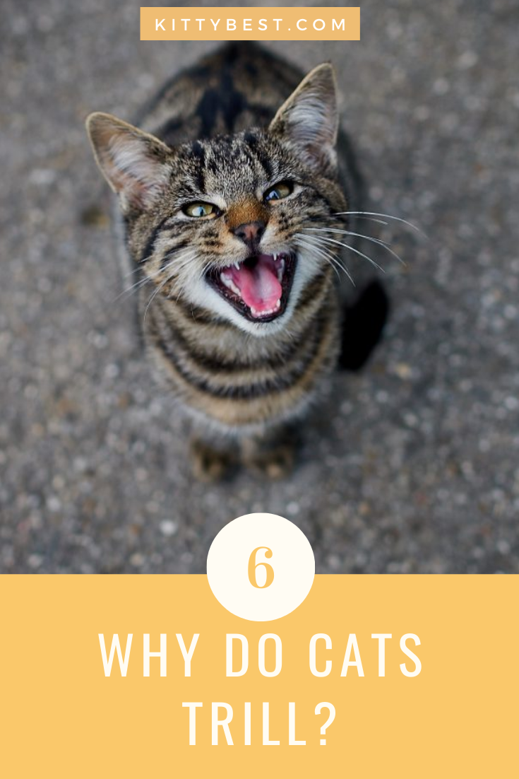 Why does your cat make so many different noises? Cat