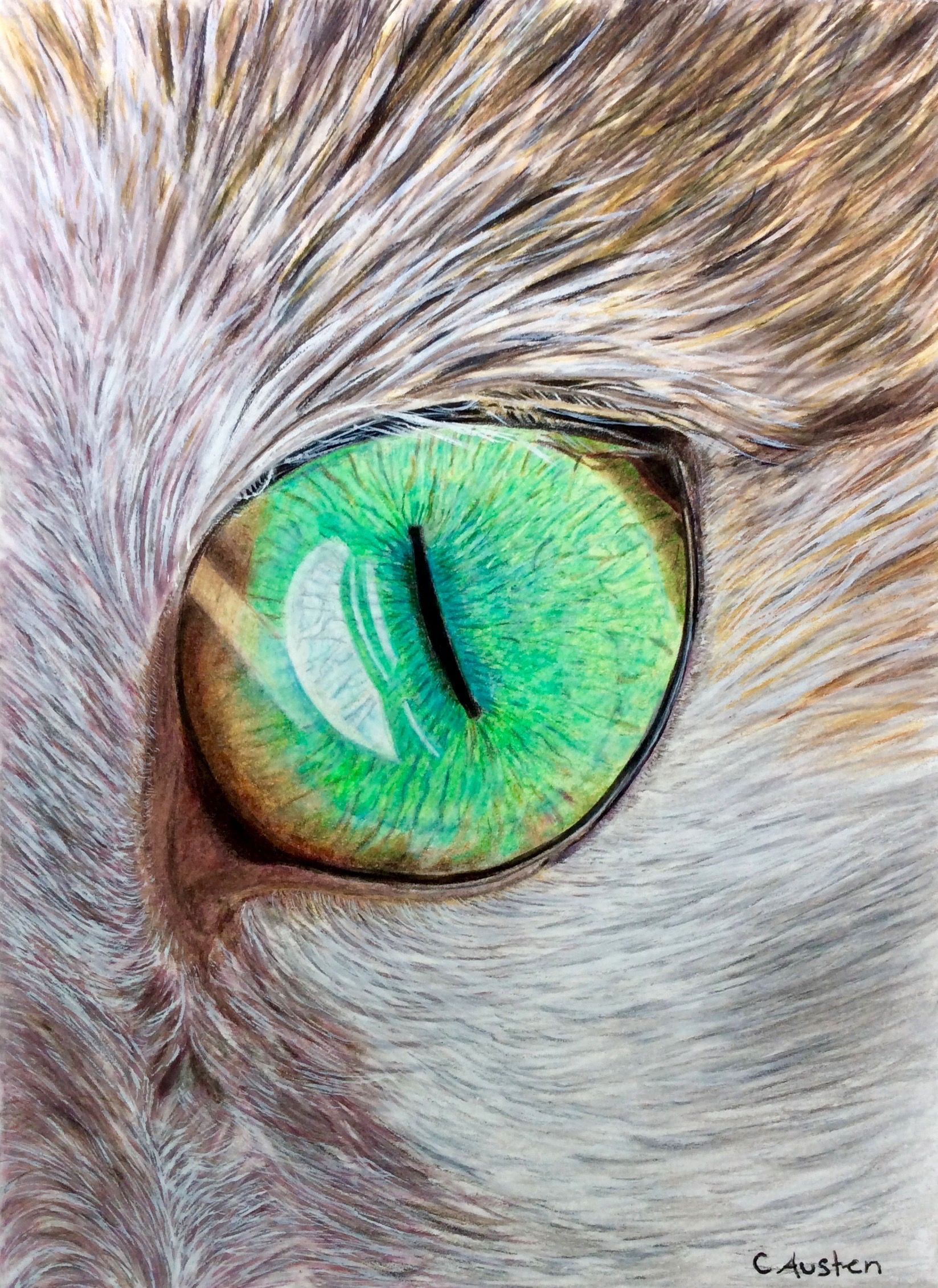 Cat\'s Eye: Coloured pencil and some gouache on the fur. 6 x 8 ...