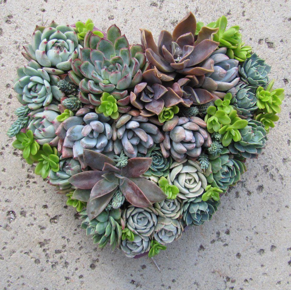Succulent Heart <3