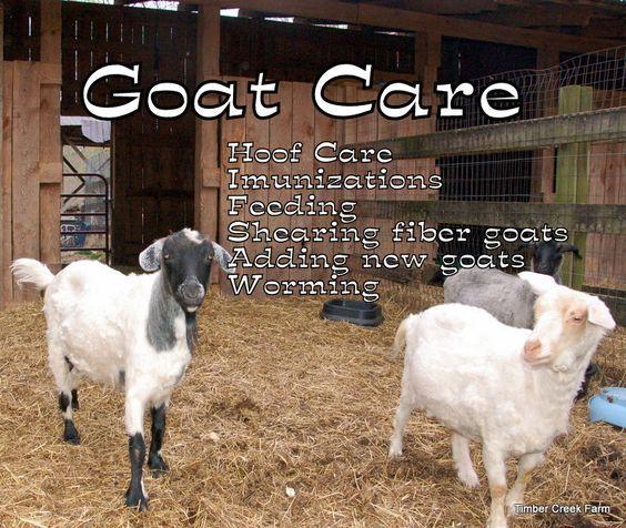 Keeping Goats, Goat Care, Goat