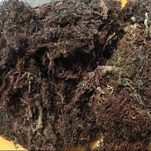 Jamaican Gold Irish Sea Moss (Raw, Wildcrafted) #irishsea Tender Promise added a photo of their purchase #irishsea Jamaican Gold Irish Sea Moss (Raw, Wildcrafted) #irishsea Tender Promise added a photo of their purchase #irishsea