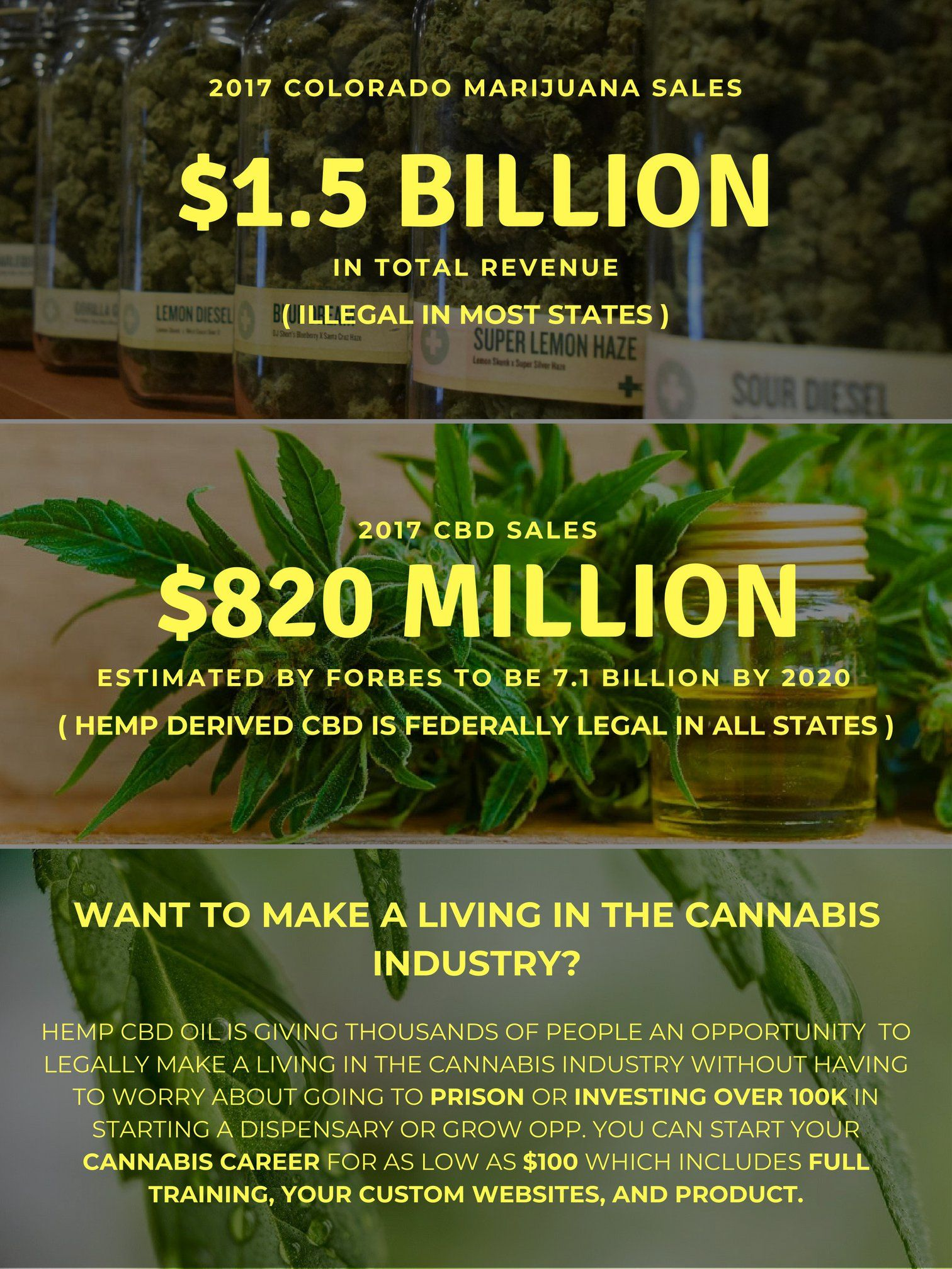 Google cbd industry look at the growth www