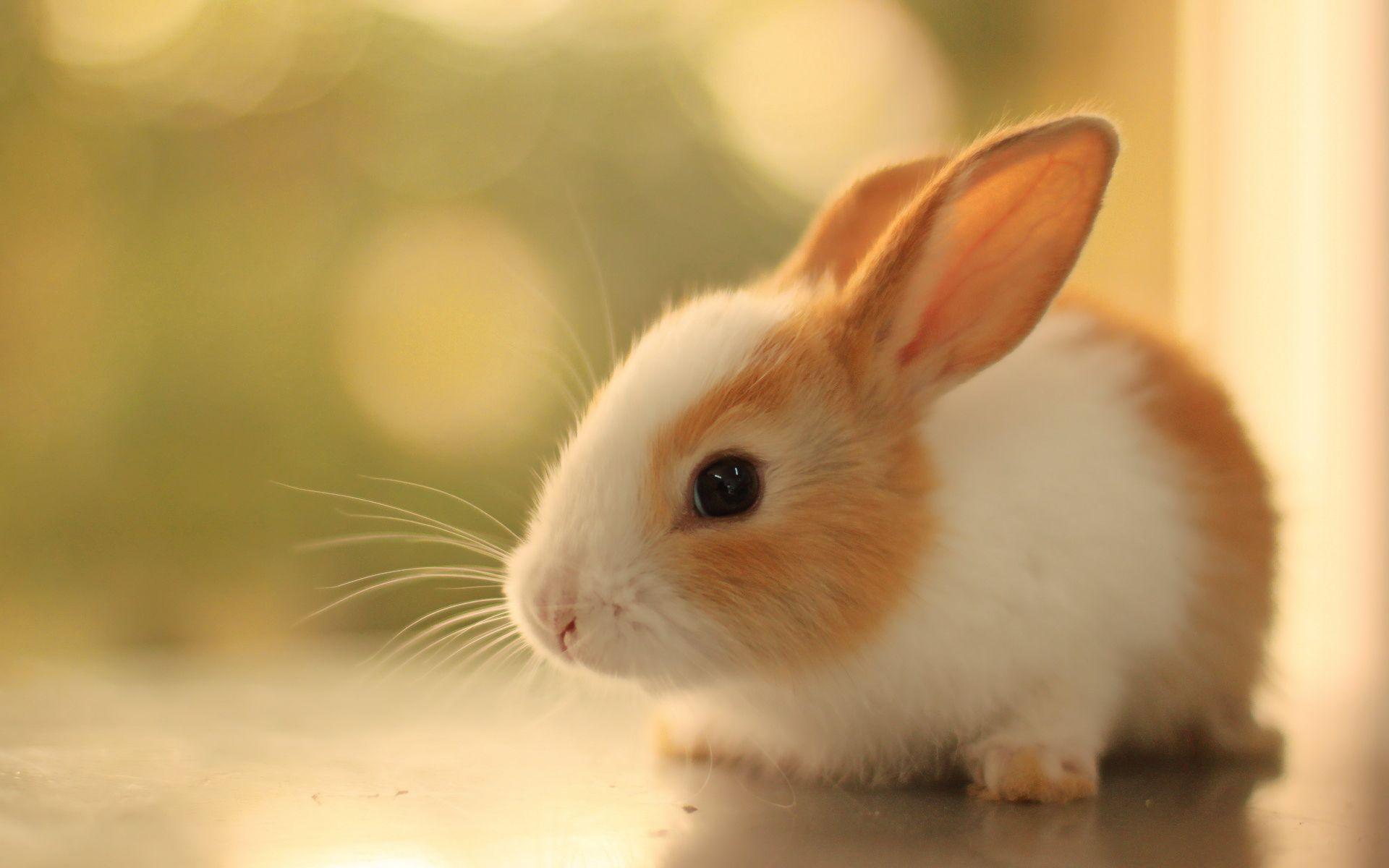 Cute Baby Rabbits Cute Kawaii Animals Rabbit Wallpaper Animal Wallpaper