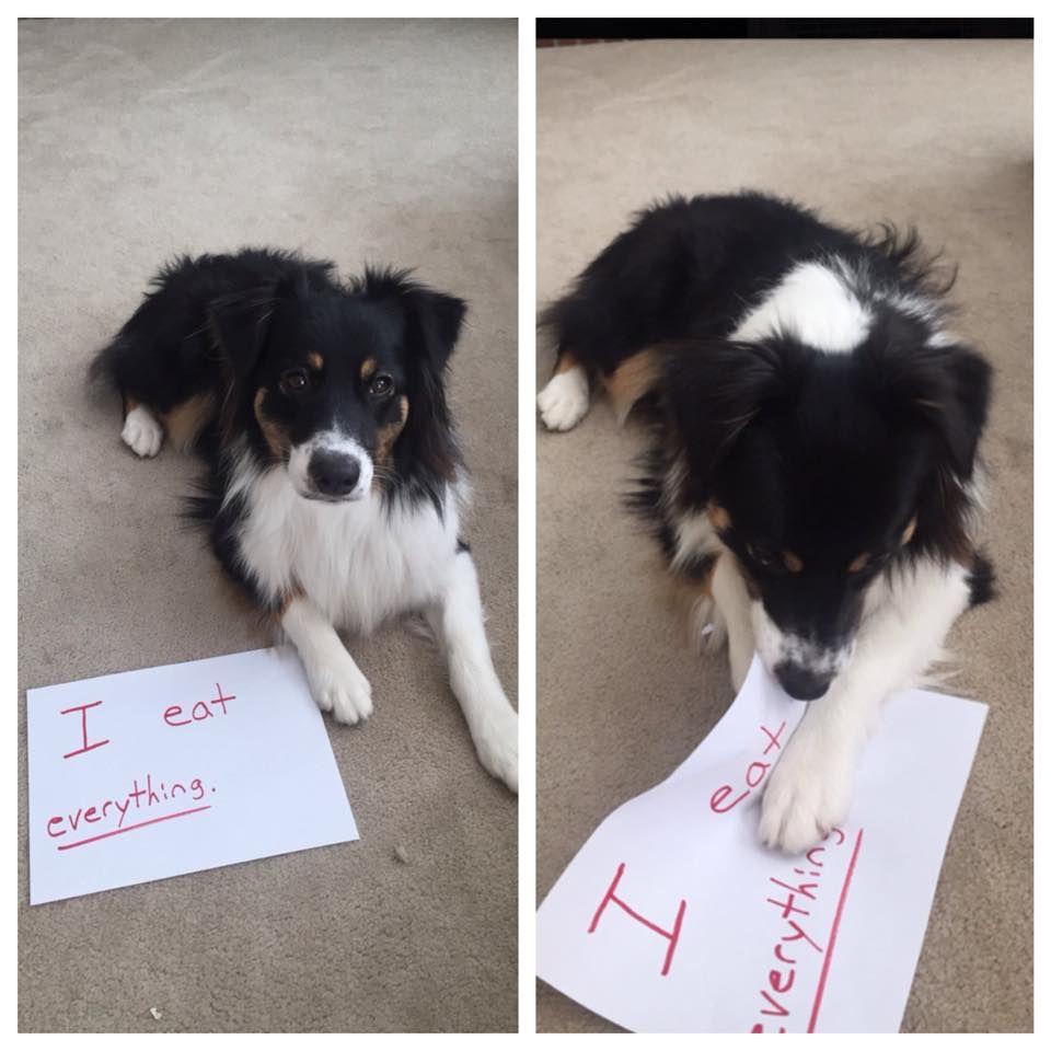 Yes Yes I Do Followme Cooliphone6case On Twitter Facebook Google Instagram Linkedin Blogger Tumblr Youtube Funny Pictures Dog Memes Animal Memes