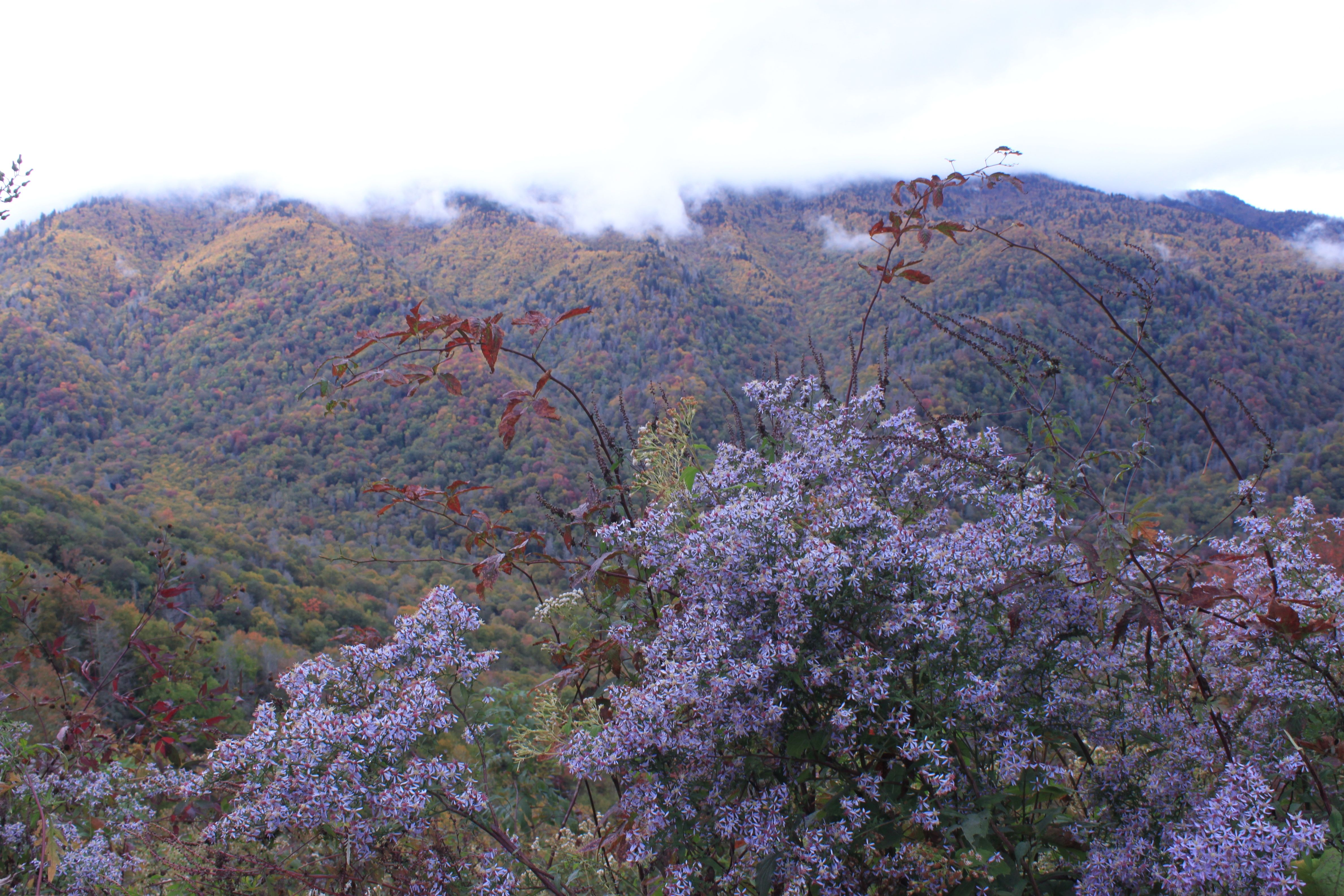 Great Smokey Mountains National Park -- scenic one hour drive between Gatlinburg, TN & Cherokee, N.C.