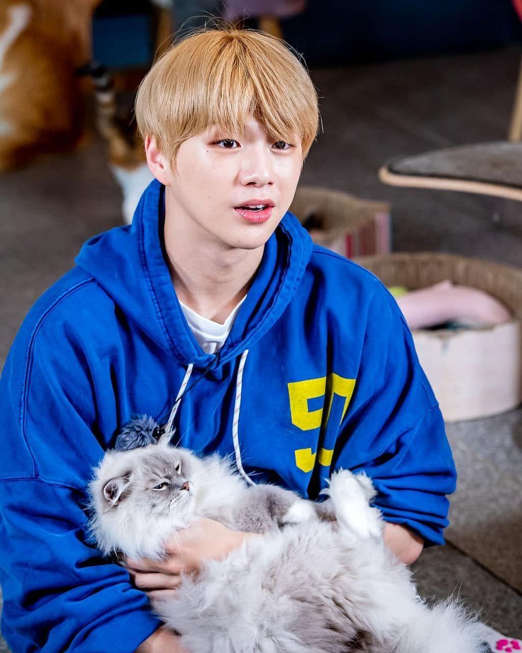 Kang Daniel X OSEN  #kangdaniel #osen #model #vlive #live #catman #cat #catperson #hug #konnectentertainment #ceo #idol ... #kangdaniel