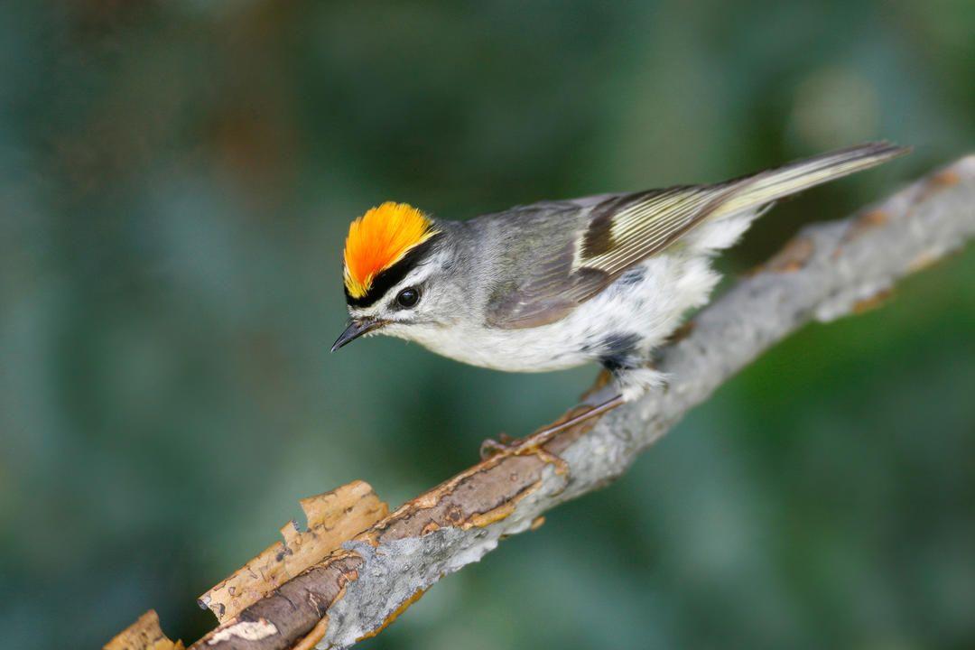 Guide to North American Birds | Audubon | Birds, Backyard ...