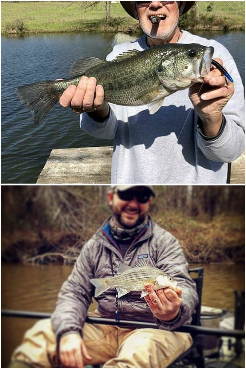 Learn how to catch trout like a professional. You don't