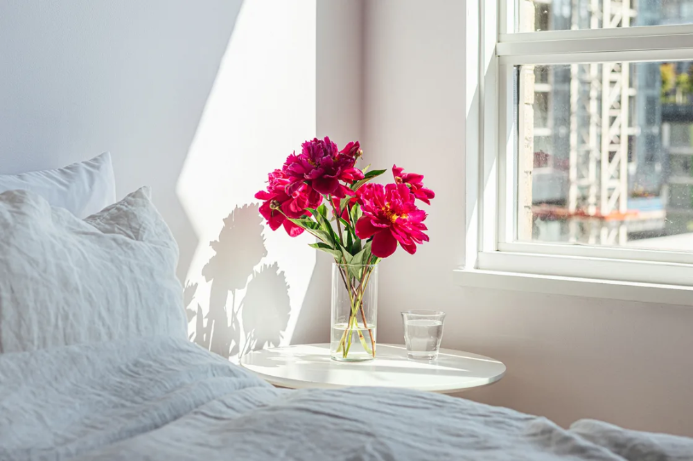 15 lucky houseplants according to feng shui  where to put