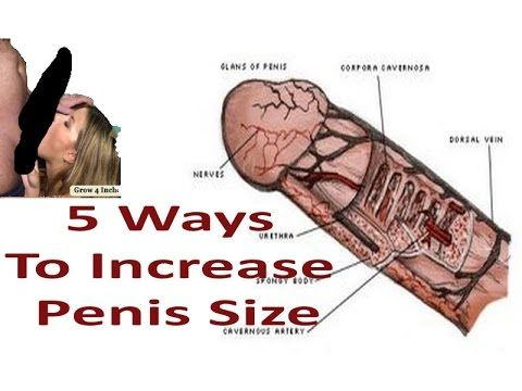Things to make penis bigger