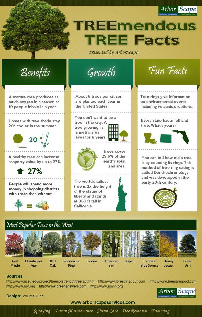 Denver Tree Lawncare Services Blog Tree Care Gardening Infographic Tree Service