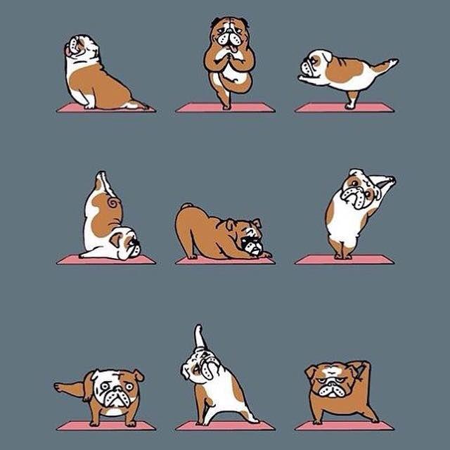 Bulldog Yoga ) Bulldog breeds, Dog