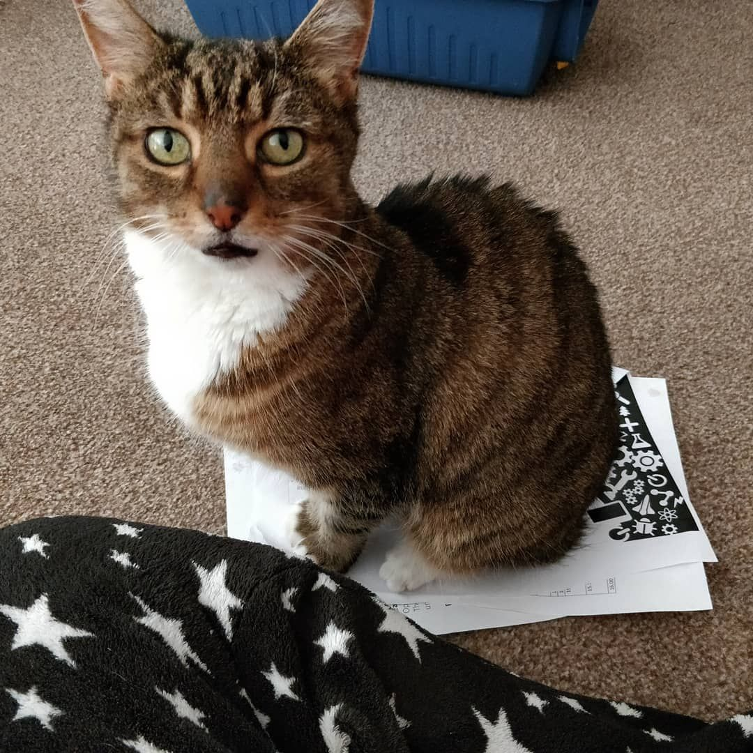 Work Is For The Week Cat Recipes Monty The Cat Cats Things