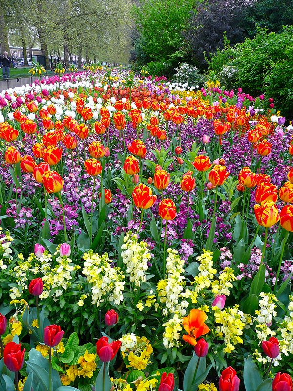Spring Flower Beds In St James Park Flower Fields And Trees