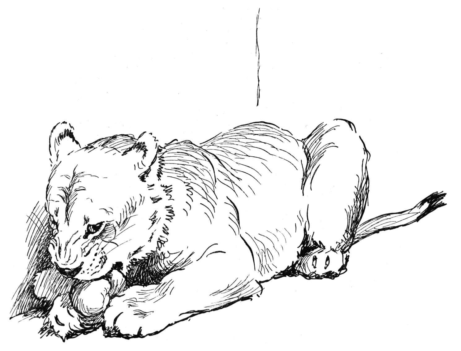 Uncategorized Mountain Lion Coloring Pages lion coloring pages free church pages