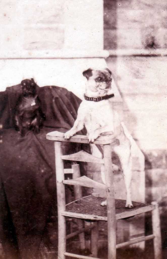 1860s Doggies (Posthumous Picture? Both Dogs look 'Posed' for a shot that would take minutes to take)