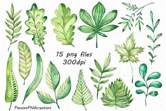 Watercolor Leaves Clipart, watecolour leaf clip art, digital, png ...