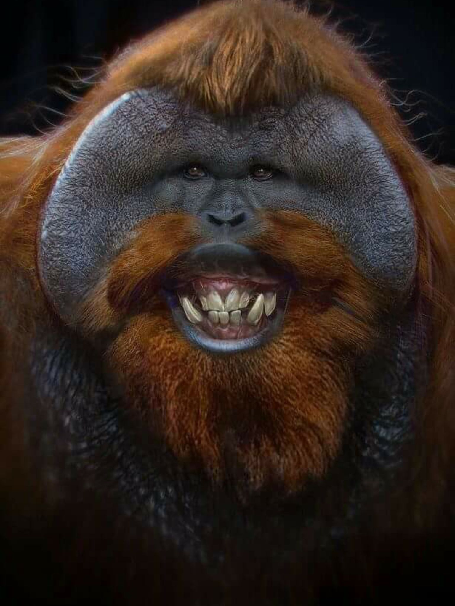 Animals orangutans male orangutan orangutan monkey ugly monkey ape monkey
