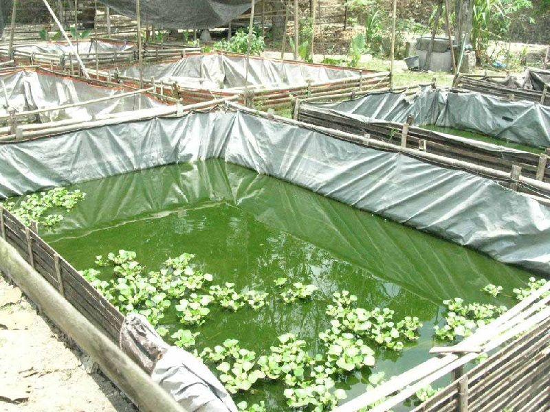 Budidaya Ikan Lele Di Kolam Terpal Pekarangan Terpal Ikan