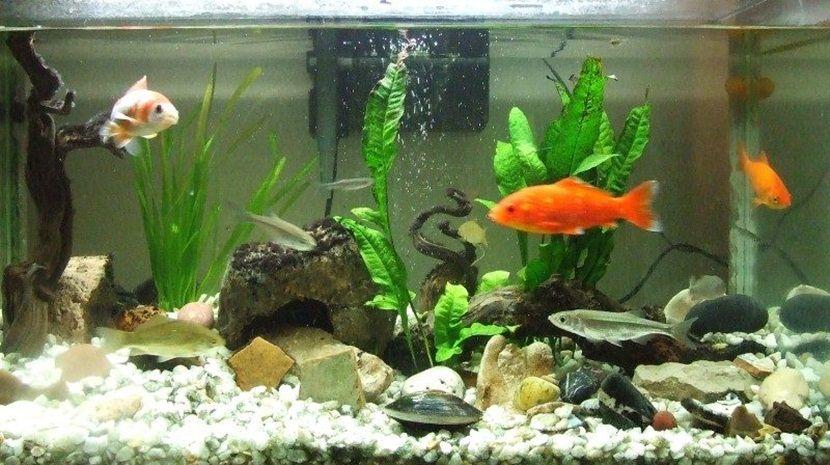 Las plantas en el acuario de agua dulce  Acuario agua dulce
