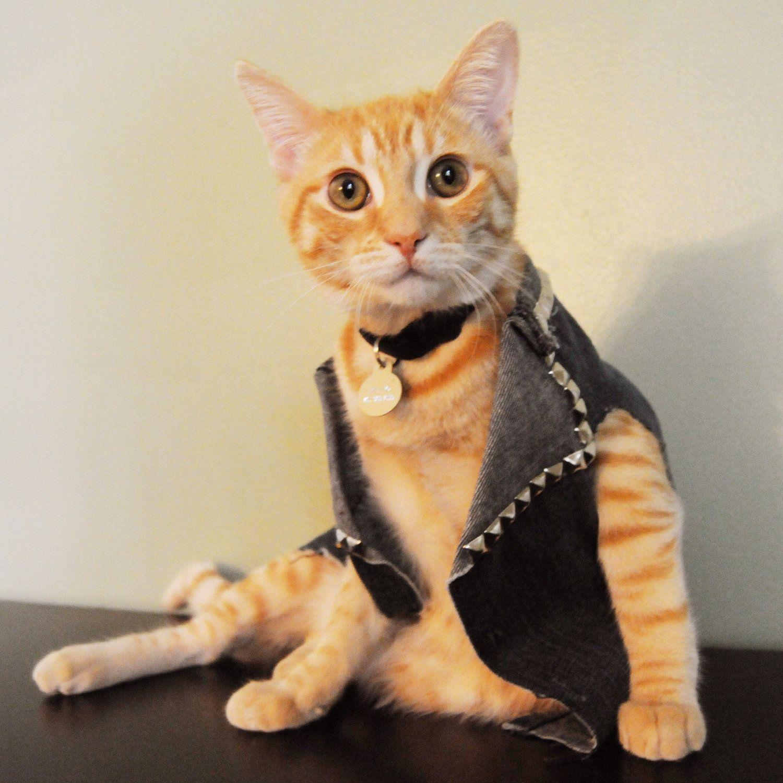 Kitten Jean Jacket Bedazzled 35 00 Via Etsy Cat Work Kitten Pets