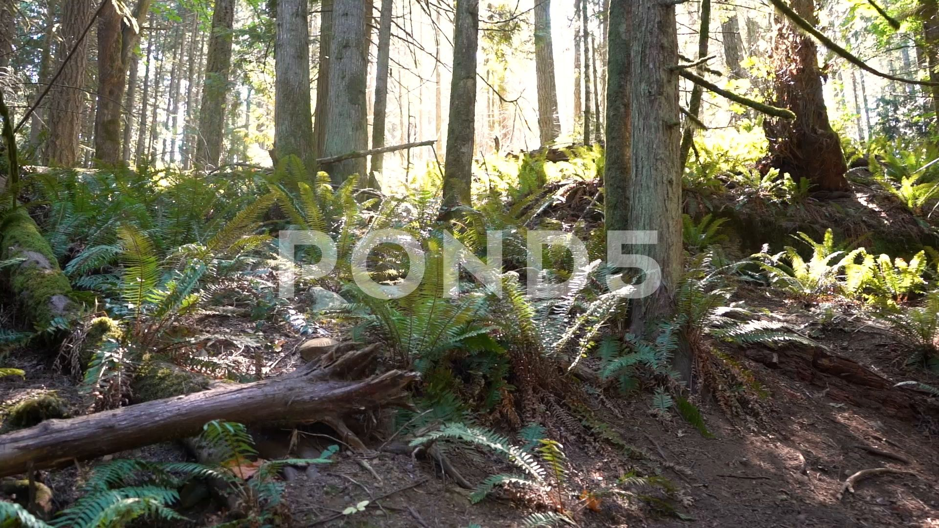 Footage Of The Cameraing Through Large Ferns Perfect For Any Nature Stock Footage Ad Large Cameraing Footage Ferns Nature Gif Aesthetic Template Nature